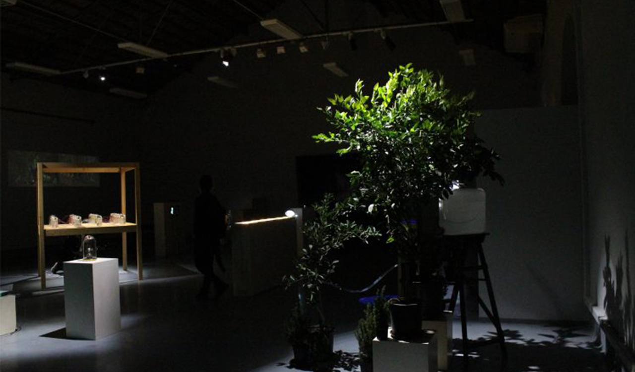 Image of a dimly lit gallery containing plants an other objects.